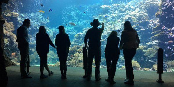 Ocean koraalrif